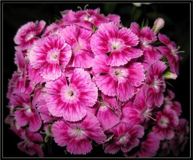 dịu dàng với sắc hoa pansee