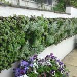 """Độc đáo với """"vườn"""" trên tường"""